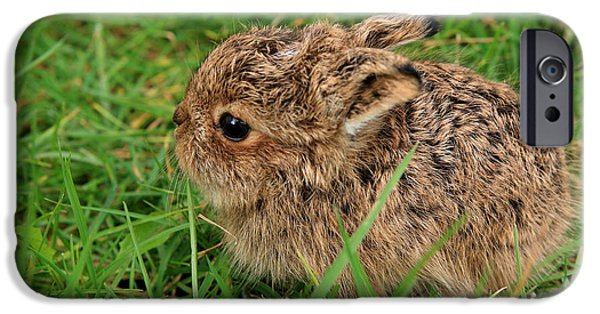 March Hare iPhone Cases - Leveret iPhone Case by Aidan Moran