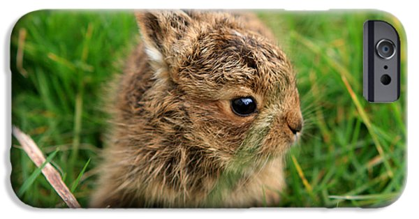 March Hare iPhone Cases - Leveret In The Grass iPhone Case by Aidan Moran