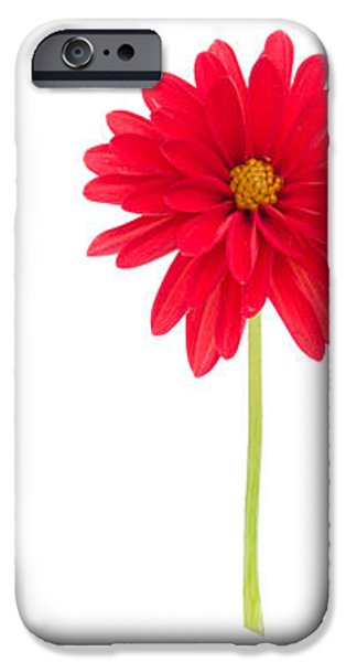 life and death of a dahlia iPhone Case by Meirion Matthias