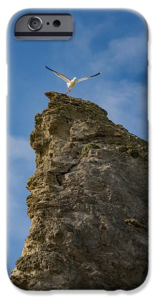 Flying Seagull iPhone Cases - Liftoff iPhone Case by Darren  White