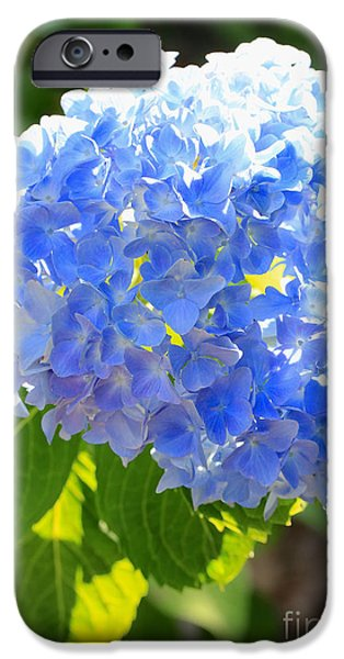 Recently Sold -  - Pastel iPhone Cases - Light through Blue Hydrangeas iPhone Case by Carol Groenen