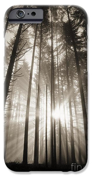 Art Medium iPhone Cases - Light Through Forest iPhone Case by Greg Vaughn - Printscapes