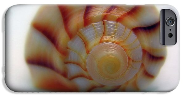 States iPhone Cases - Lightning Whelk Shell iPhone Case by Patti Whitten