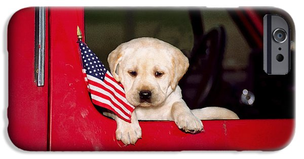 Puppies iPhone Cases - Lil Lab Patriot 1 iPhone Case by Dale Hall