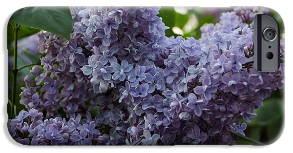 Norway iPhone Cases - Lilac 3 iPhone Case by Lana Art