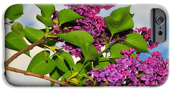 Catherine Reusch Daley iPhone Cases - Lilacs iPhone Case by Catherine Reusch  Daley