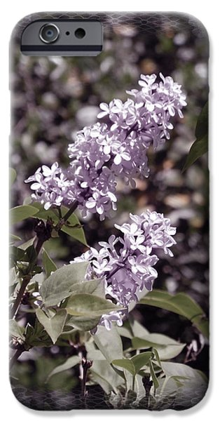 Lilac Flower iPhone Cases - Lilacs in Lace iPhone Case by Laura Iverson