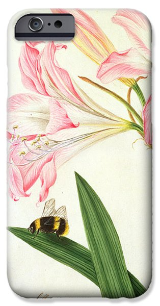 Flora Drawings iPhone Cases - Lilium Belladonna and Bee iPhone Case by Matilda Conyers