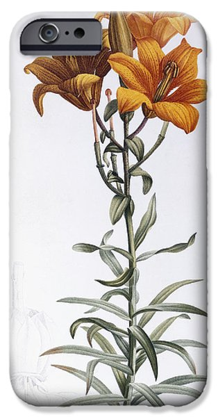 Flora Drawings iPhone Cases - Lilium Bulbiferum iPhone Case by Pierre Joseph Redoute