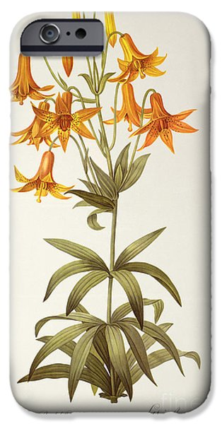 Lilac iPhone Cases - Lilium Penduliflorum iPhone Case by Pierre Joseph Redoute