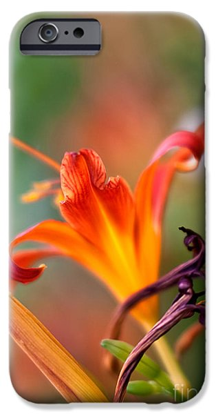Petals iPhone Cases - Lilly flowers iPhone Case by Nailia Schwarz
