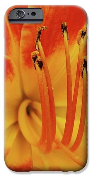 Lilly Macro iPhone Case by Michael Peychich