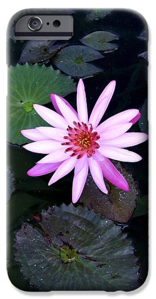 Lilly Pads iPhone Cases - Lilly Pad iPhone Case by Rebecca Cozart
