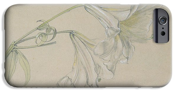 Flora Drawings iPhone Cases - Lily iPhone Case by Albert Williams