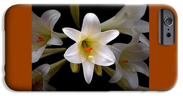 Botanical Photographs iPhone Cases - Lily iPhone Case by Ben and Raisa Gertsberg