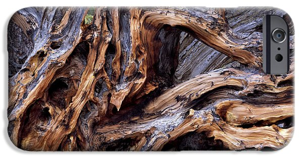 Tree Roots iPhone Cases - Limber Pine Roots iPhone Case by Leland D Howard