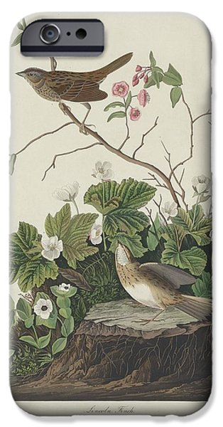 Lincoln Drawings iPhone Cases - Lincoln Finch iPhone Case by John James Audubon