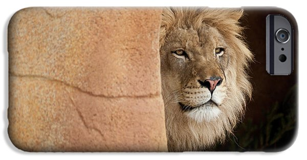 Zoo Animal iPhone Cases - Lion Emerging    captive iPhone Case by Steve Gadomski