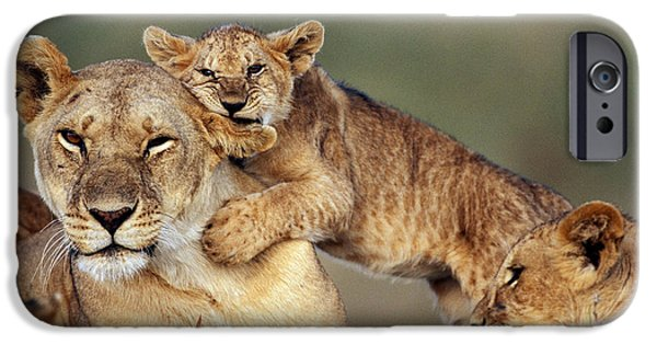 Caring Mother iPhone Cases - Lion With Cubs iPhone Case by Michel & Christine Denis-Huot