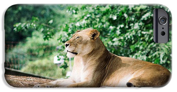 Smithsonian iPhone Cases - Lioness iPhone Case by Chris Marcussen