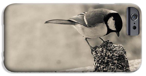 Feeding Birds iPhone Cases - Little Bird Feeding iPhone Case by Candace Fowler