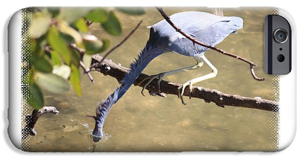 Action Shot iPhone Cases - Little Blue Heron Going for Fish with Framing iPhone Case by Carol Groenen