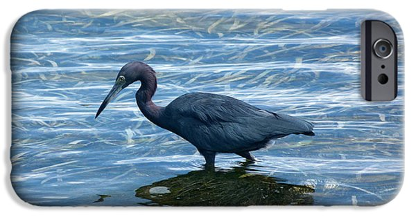Little iPhone Cases - Little Blue Heron wading in water iPhone Case by Andrea Freeman