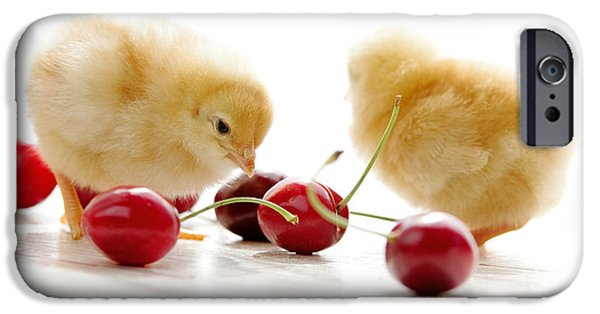 Pleasure iPhone Cases - Little Chick and red Cherries iPhone Case by Tanja Riedel