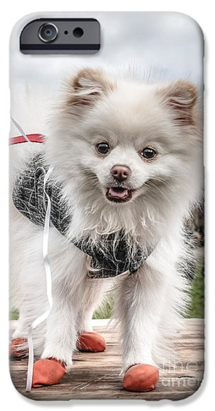 Japanese Dog iPhone Cases - Little Doggie iPhone Case by Edward Fielding