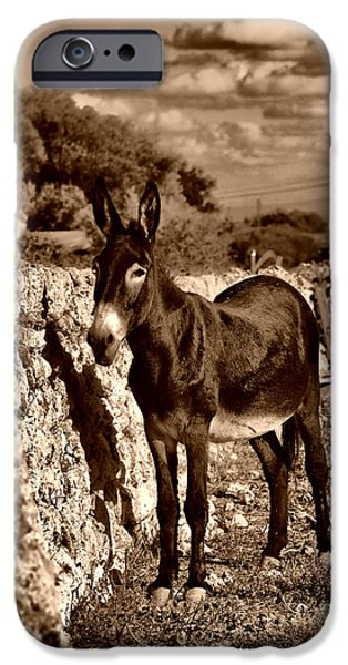 Meadow Photographs iPhone Cases - Little Mediterranean Donkey Dreams With White Eyes And Belly in sephia By Pedro Cardona iPhone Case by Pedro Cardona
