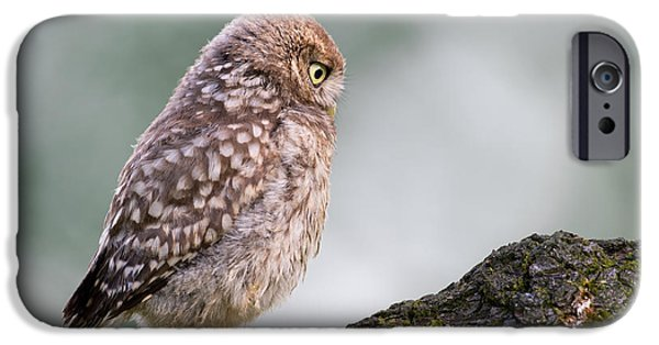 Baby Bird iPhone Cases - Little Owl Chick Practising Hunting Skills iPhone Case by Roeselien Raimond