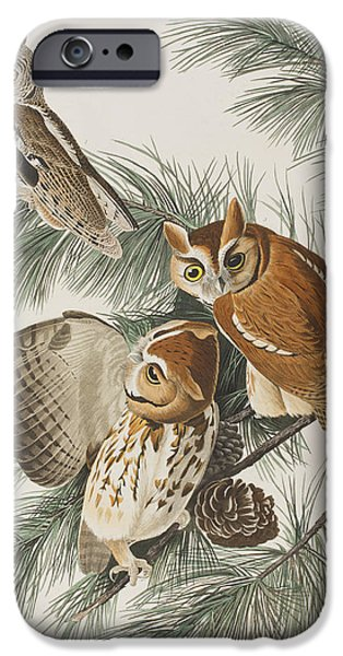 Pines Drawings iPhone Cases - Little Screech Owl  iPhone Case by John James Audubon
