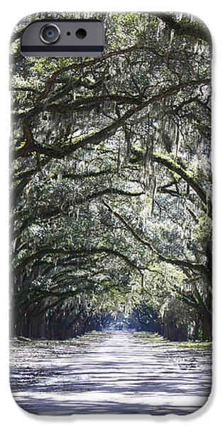 Live Oak Lane in Savannah iPhone Case by Carol Groenen