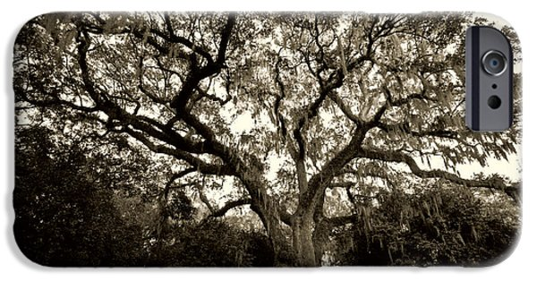 Live Oaks iPhone Cases - Live Oak Tree with Spanish Moss iPhone Case by Dustin K Ryan