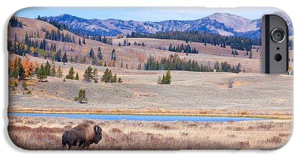 Park Scene Digital Art iPhone Cases - Lone Bull Buffalo iPhone Case by Cindy Singleton