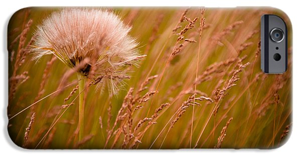Grass iPhone Cases - Lone Dandelion iPhone Case by Bob Mintie