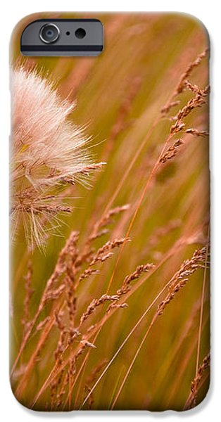 Lone Dandelion iPhone Case by Bob Mintie