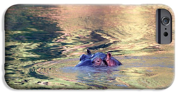 Hippopotamus iPhone Cases - Lonely Hippo iPhone Case by Sebastian Musial