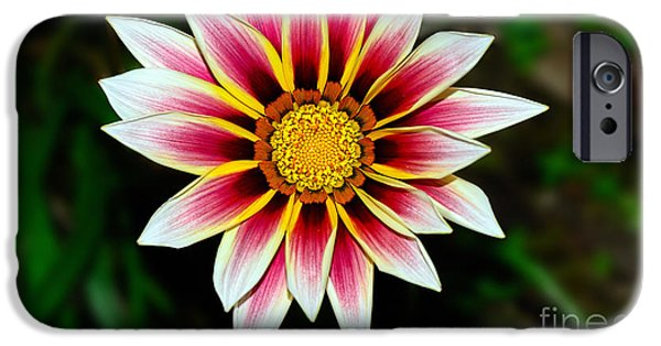 Floral Photographs iPhone Cases - Look at Me Daisy by Kaye Menner iPhone Case by Kaye Menner