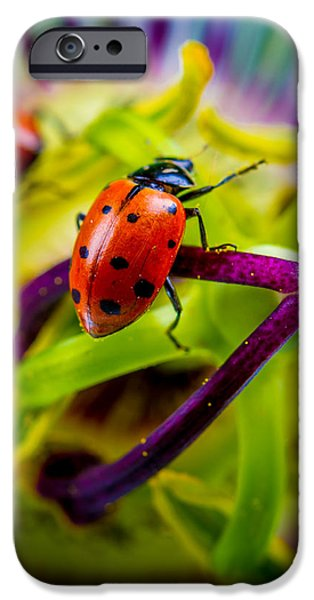 Ladybug iPhone Cases - Look at the colors over there. iPhone Case by TC Morgan