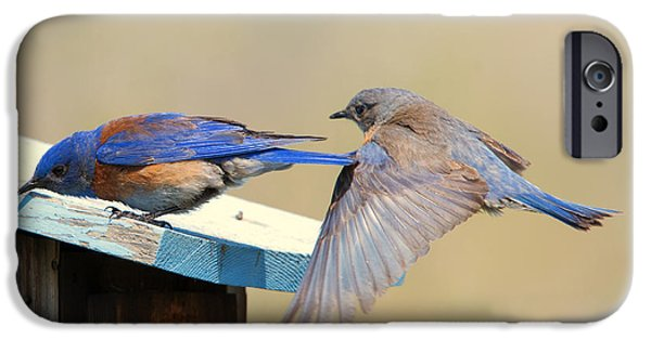 Bluebird iPhone Cases - Look Behind You iPhone Case by Mike Dawson