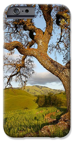 Recently Sold -  - Creek iPhone Cases - Looming over the mountain curious roots Shell Ridge open space 2014 iPhone Case by Benjamin Race - Arc of Light Photography
