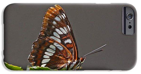 Rust iPhone Cases - Lorquins Admiral iPhone Case by Gary Wing