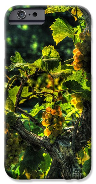 Drama iPhone Cases - Lost Creek Chardonel iPhone Case by William Fields