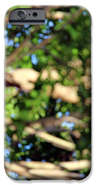 Cora Wandel iPhone Cases - Lost In A Tree iPhone Case by Cora Wandel