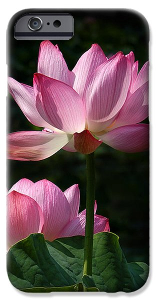 Nature Study iPhone Cases - Lotus Beauties--Upstaged DL048 iPhone Case by Gerry Gantt
