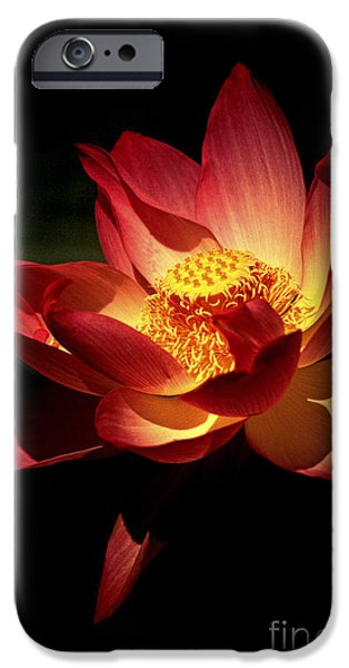 Impressions Of Light iPhone Cases - Lotus Blossom iPhone Case by Paul W Faust -  Impressions of Light