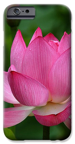 Lotus--Shades of Past and Future DL029 iPhone Case by Gerry Gantt