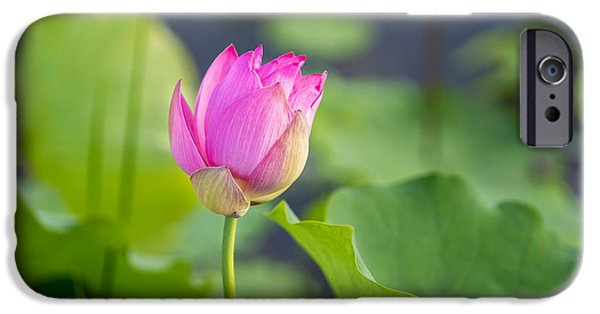Buddhist iPhone Cases - Lotus iPhone Case by Thanh Van Nguyen