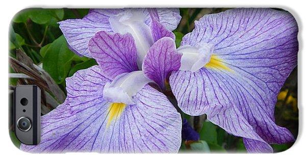 Arkansas iPhone Cases - Louisiana Purple Iris iPhone Case by Jefferson Danley